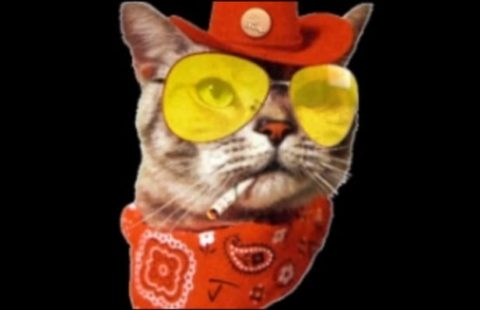 Jason Levinthal, cat