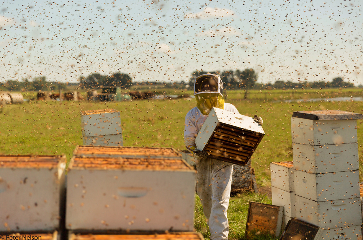 Peter Nelson and Sally Roy discuss their film, The Pollinators, on the Blister Podcast. They discuss the current status of bees, why it very much matters, monoculture, why bees are dying, soil, and much more
