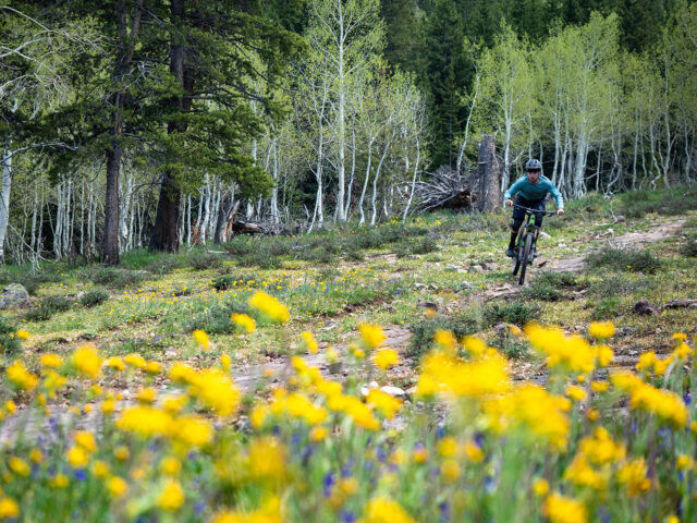 David Golay reviews the Specialized 2FO DH Clip for Blister